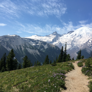 Dirt path across grassy field with mt rainer in the distance